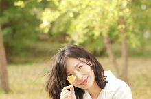 北京|奥森公园秋天的银杏