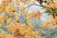 南方的秋色不逊色于北方