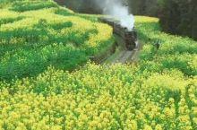 坐上嘉阳小火车,感受春天的油菜花香