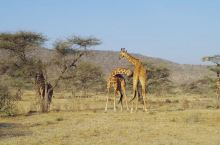 肯尼亚旅游 | 如何玩转Safari