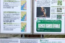 """釧路湿原国立公园是日本最大的湿地,其面积约为269平方公里。它是日本在""""保护水禽生息地国际条约""""(拉"""