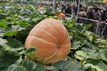 寿光蔬菜博览会