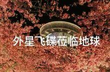 外星飞碟突临地球?夜樱真美!