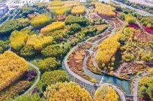 张掖国家湿地公园地处黑河中游祁连山洪积扇前缘和黑河古河道及泛滥平原的潜水溢出地带,是由河流、草本沼泽