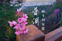 普洱   櫻花綻放的一月天