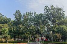 秦淮风月  和平公园