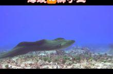 海鳗狮子鱼