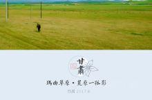 甘南自驾|去玛曲草原,看甘肃最美草原