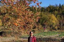 有一种秋色叫塔川……