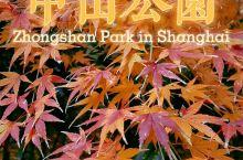 魔都赏枫攻略:中山公园