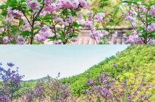 遨游浪漫的樱花圣地就在天子地