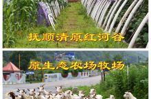 清原红河谷漂流,原生态农场,东北农家味道