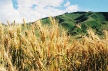 新疆美景无处不在,这里是我最爱。