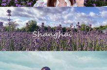 魔都周末|六月的上海,多了一道迷人的紫色