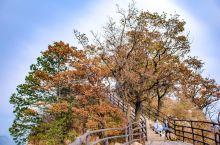 """王屋山是中国古代九大名山之一,号称""""天下第一洞天""""。主峰天坛山海拔1715米,是华夏祖先轩辕黄帝设坛"""
