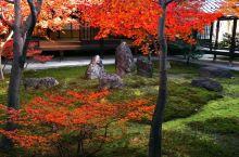 建仁寺的红叶风光!