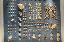漂亮的贝壳摆出来的造型,看上去很漂亮