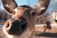 亲爱的客栈 与小鹿作伴打卡最古老火车站