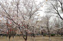 春暖花开,踏春寻花