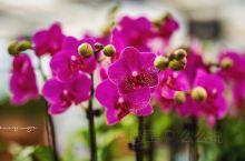 滨州亲子研学好去处 博兴博华生态农业  发现滨州的神奇之处.滨州旅行. 终于弄明白了蝴蝶兰是在冬季春