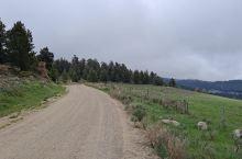 美国自驾游:大角羊国家森林哪里停房车不收费?这里免费停一夏天