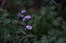 belabela小镇不知名的小花
