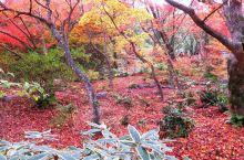 京都小众赏枫圣地宝筐院