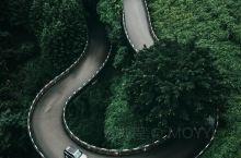 绿野仙踪被树林包围的城市