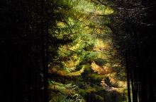 成都周边游~小众景点看松林