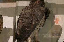 肯尼亚的鸟标本