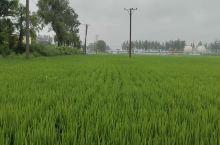 雨中的田园风光