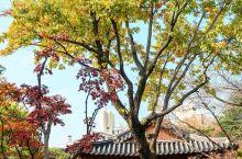 景福宫的枫叶