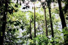 【隐秘森林】马来西亚吉隆坡国际机场