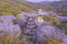 中国最美的樱花胜地,终于被我找到了