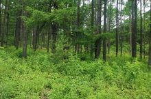 黑土地森林
