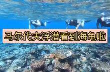 超幸运去马尔代夫浮潜海龟就在身边游