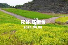 重庆秘密山谷里,藏着一大片油菜花