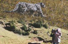 昂赛大峡谷|三遇雪豹