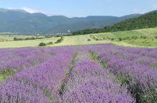 来保加利亚看花。