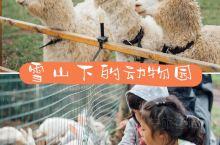丽江亲子圣地 雪山脚下的羊驼园 免票