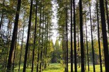 东台黄海森林公园