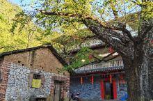 桂林海洋乡银杏