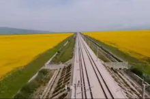 坐上高铁去青海,看窗外油菜花,黄色如海,壮观又美丽……