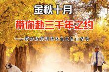 金秋十月,赴一场千年之约——额济纳胡杨林