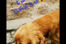走!带你去浪漫的土耳其!之 可爱狗狗🐶