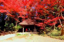 小石川后乐园的秋天美景!