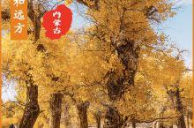 【寻找诗和远方】三千年绚丽·额济纳胡杨林