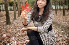 秋天的调色盘|北美大枫叶