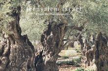 耶路撒冷的历史古迹:客西马尼园