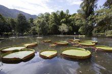 里约植物园